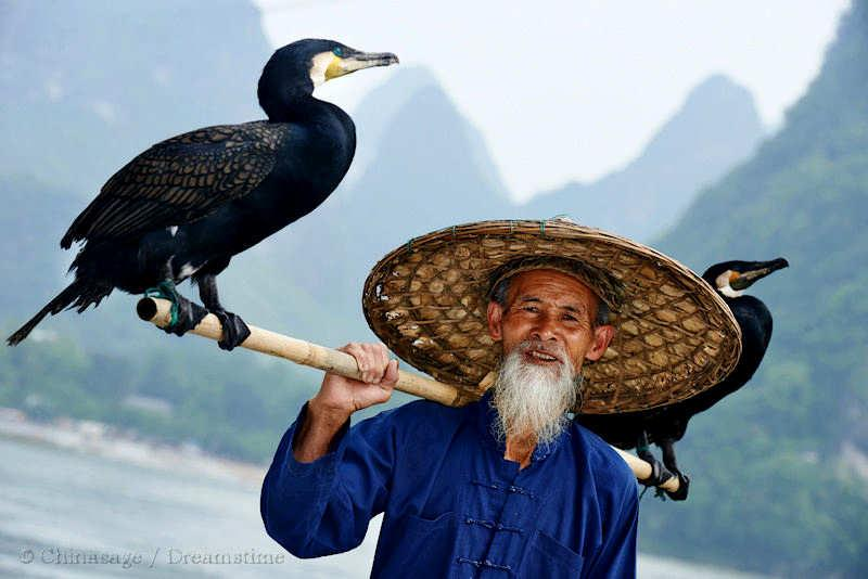 Guangxi, Yangshuo, bird, wildlife
