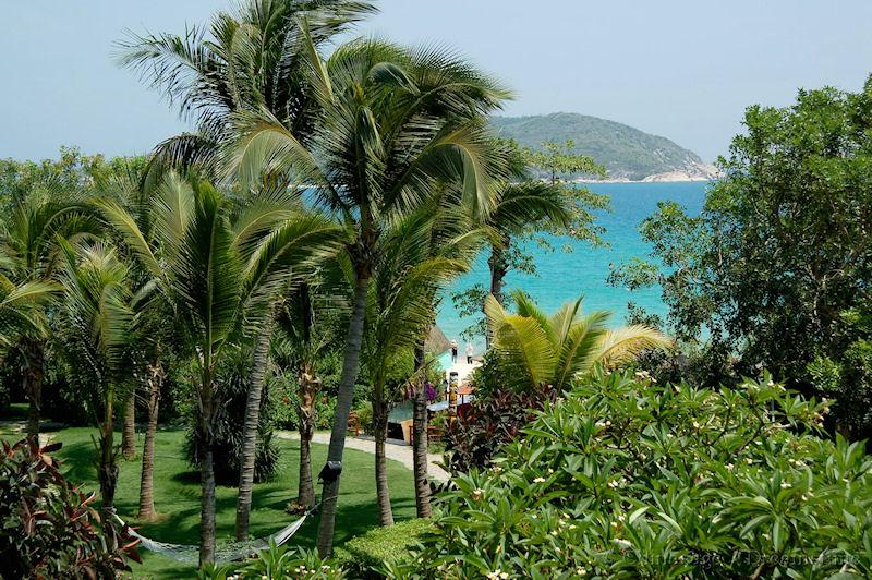 Hainan, tropical plants, coast